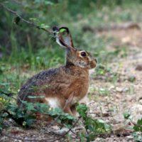 foto libro natura animali3