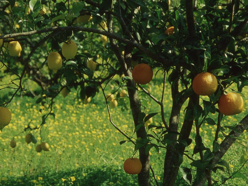 La Flora della Calabria Greca